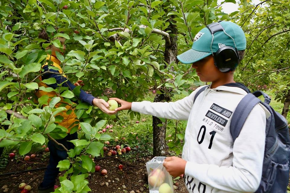 GS_ApplePicking_14
