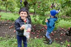 GS_ApplePicking_12